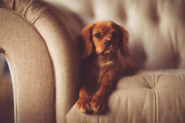 psík na gauči