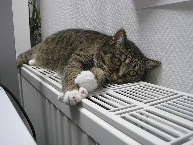 kočka na radiátoru