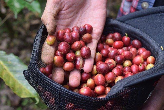 pytel indonéské kávy